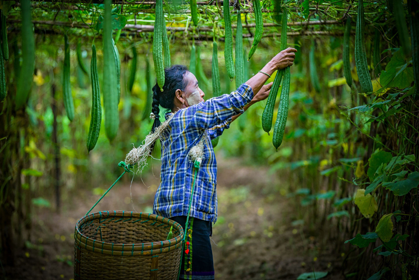 A Conversation on Sustainability – Through Photos